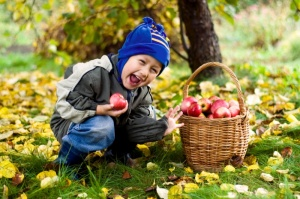 boy eating apples